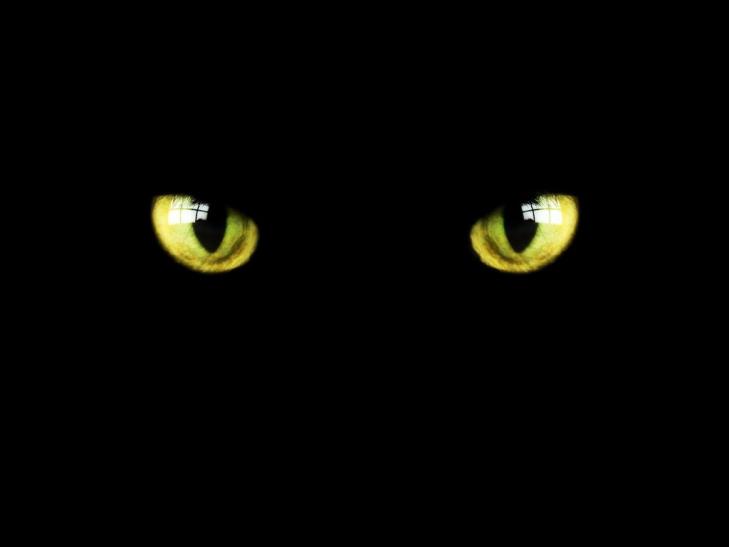 Occhi-di-gatto-su-sfondo-nero